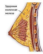 здоровая молочная железа