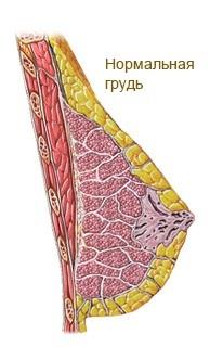 Действенные средства от фиброзно-кистозной мастопатии