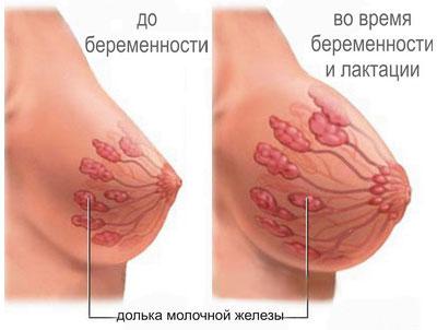 увеличение груди во время беременности