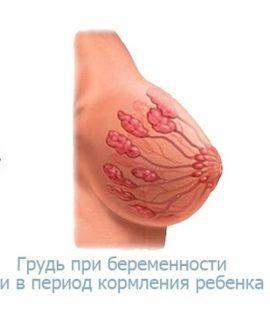 грудь при беременности и ГВ