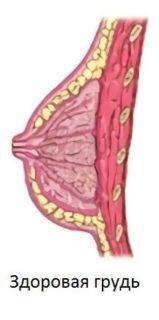здоровая грудь схема