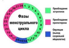 фазы менструального цикла и изменение гормонального фона