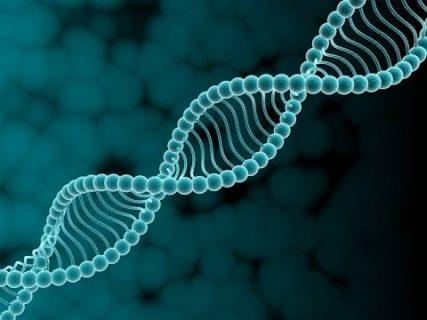 Влияние генов