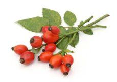 витамин с в шиповнике
